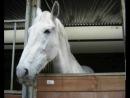 любимый клип про лошадей)))